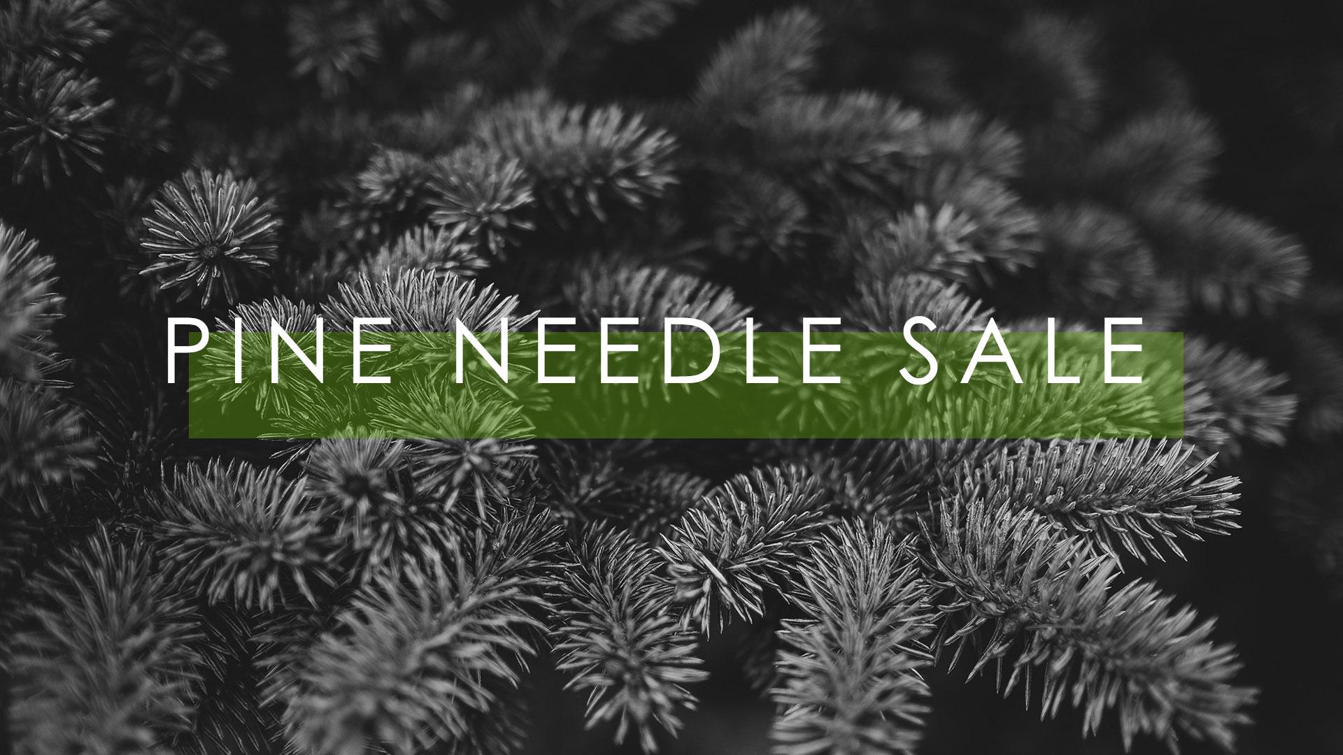 pineneedle
